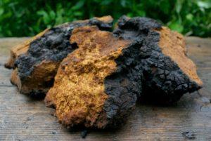 Chaga Mushroom black chunks